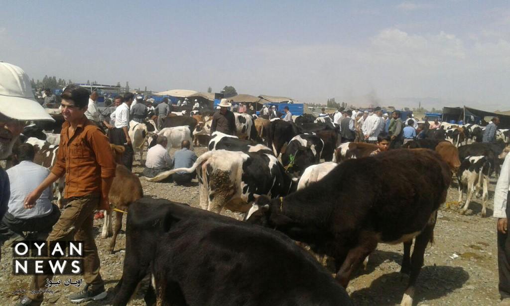 bazar-memedyar (10)