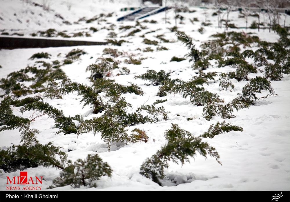 بارش برف در تبریز در نیمه دوم فروردین