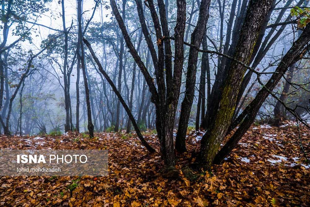 طبیعت پائیزی جنگلهای ارسباران